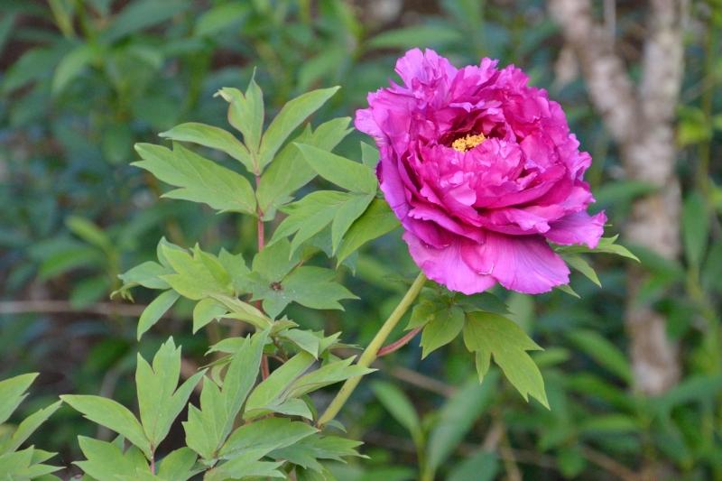 庭の花 (4)