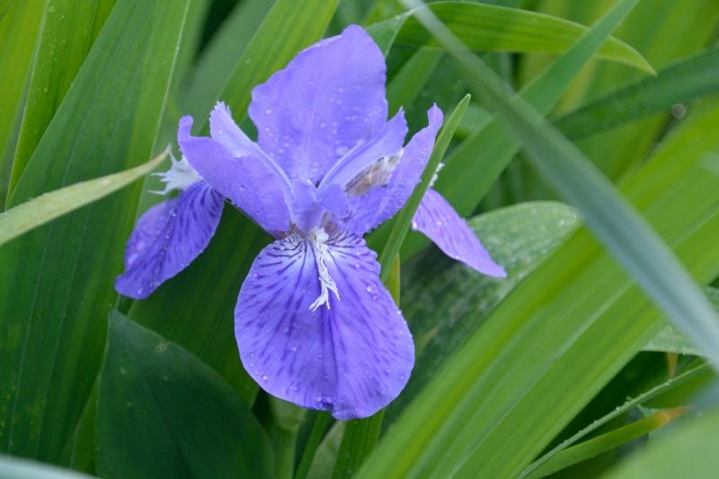 庭の花 (8)