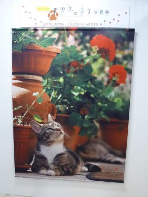 2015.5.24猫-4