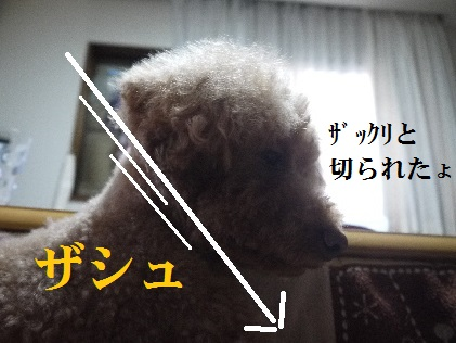 P1350184(1) - コピー