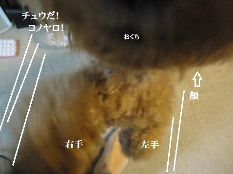 DSC02883(1).jpg