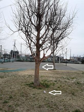 DVC00864.jpg