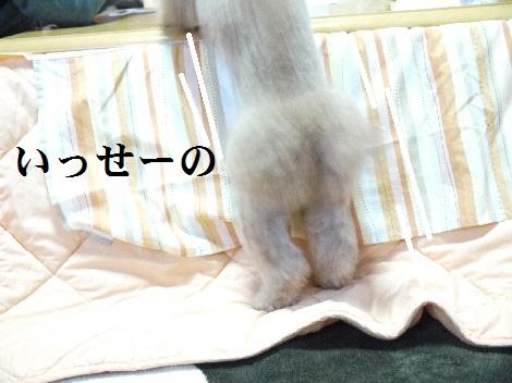 P1340148(1).jpg