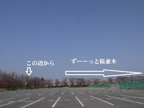 P1350429(1).jpg