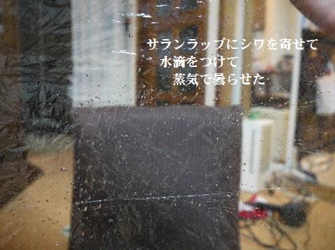 P1350583(1).jpg