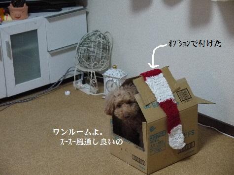 P1350649(1).jpg