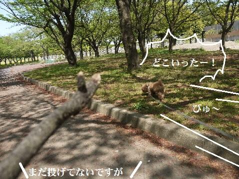 P1350854(1).jpg