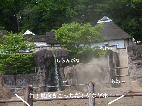 P1350964(1).jpg