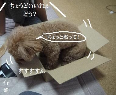 P1360249(1).jpg