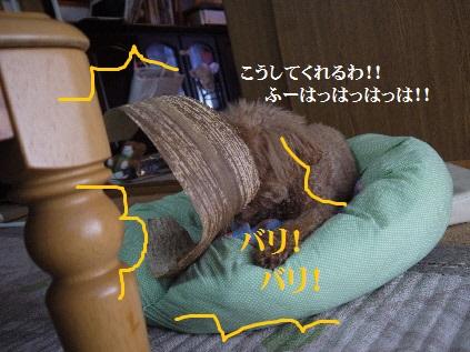 P1360279(1).jpg