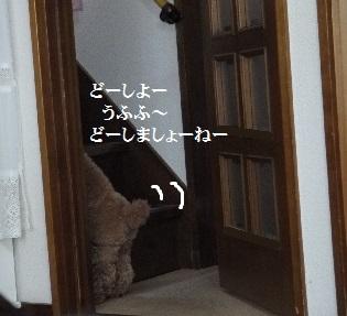 P1360318(1).jpg