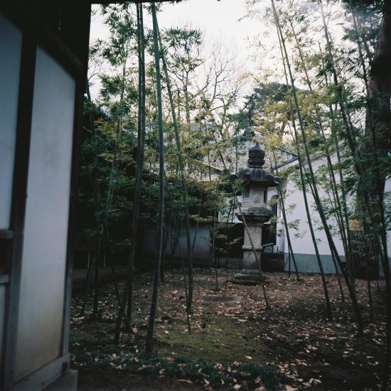 20150114二眼レフ10枚目・庭の竹