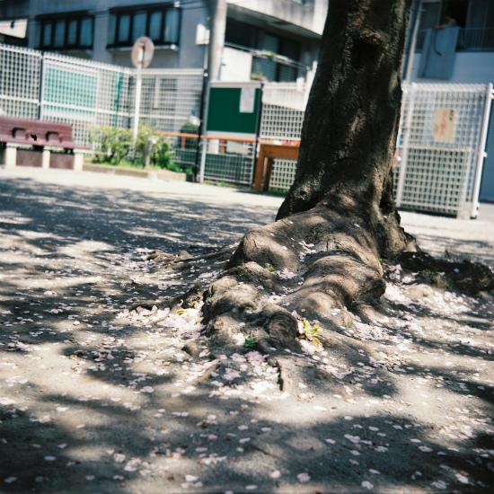 20150422二眼レフ12枚目・桜