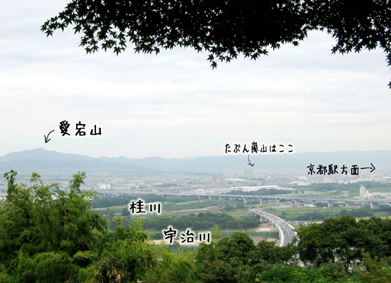 石清水八幡宮の猫と走井餅09