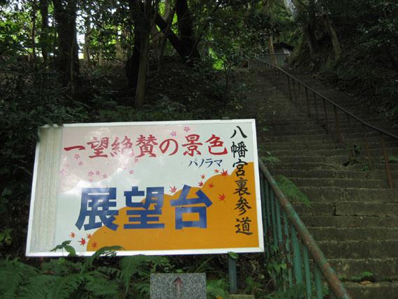 石清水八幡宮の猫と走井餅08