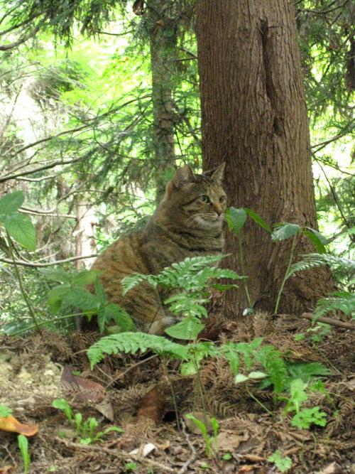 石清水八幡宮の猫と走井餅19