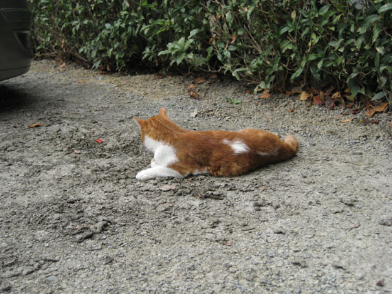 石清水八幡宮の猫と走井餅16