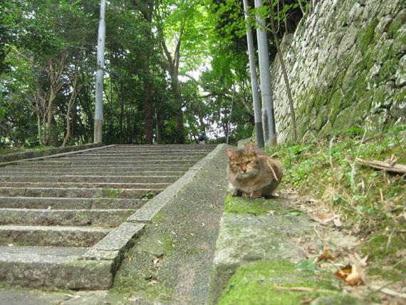 石清水八幡宮の猫と走井餅20