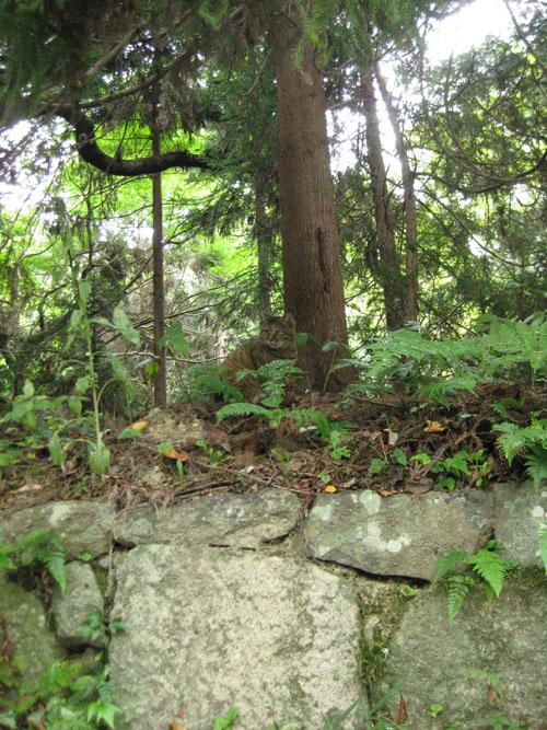 石清水八幡宮の猫と走井餅18