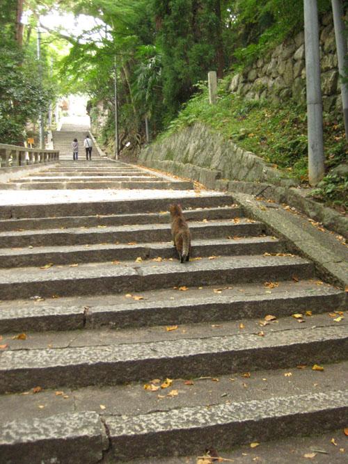 石清水八幡宮の猫と走井餅21