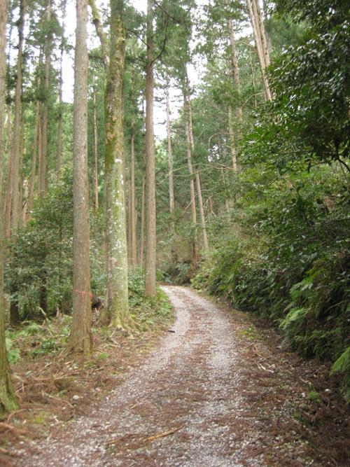 熊野古道・三瀬坂峠②-01
