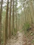 熊野古道・三瀬坂峠②-11