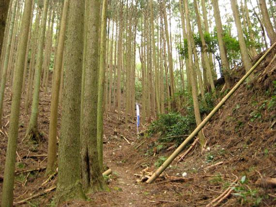 熊野古道・三瀬坂峠②-14