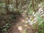 熊野古道・三瀬坂峠③-05