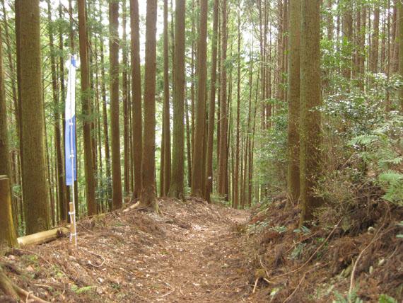 熊野古道・三瀬坂峠③-01