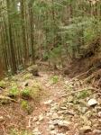熊野古道・三瀬坂峠③-03