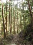 熊野古道・三瀬坂峠③-04