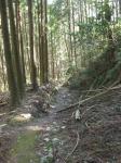 熊野古道・三瀬坂峠③-09