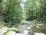 熊野古道・三瀬坂峠④-09