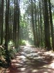 熊野古道・ツヅラト峠2-25
