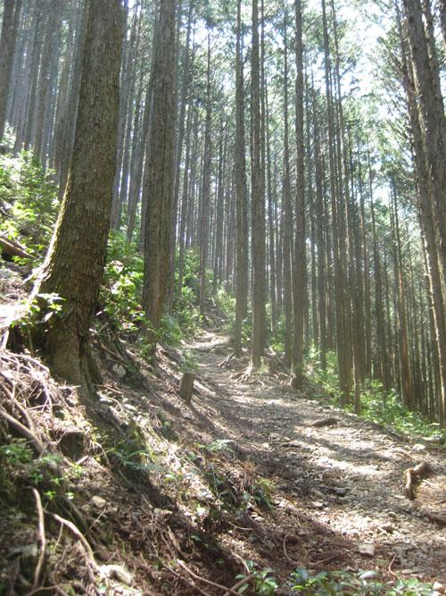熊野古道・ツヅラト峠3-10