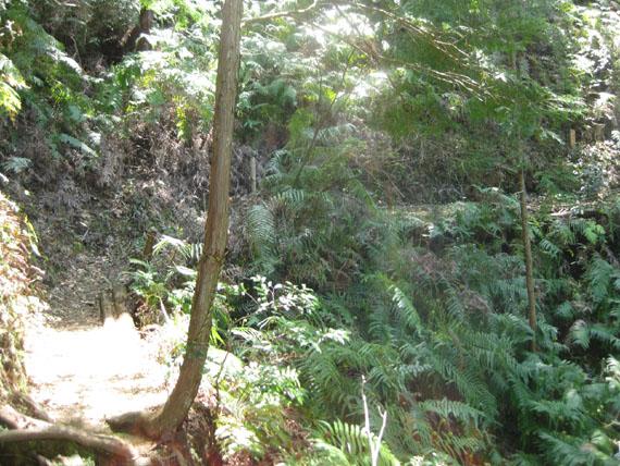 熊野古道・ツヅラト峠3-14