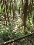 熊野古道・ツヅラト峠6-11