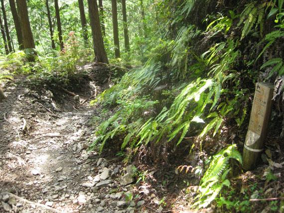 熊野古道・ツヅラト峠6-16