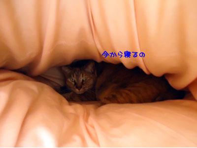 komati381.jpg