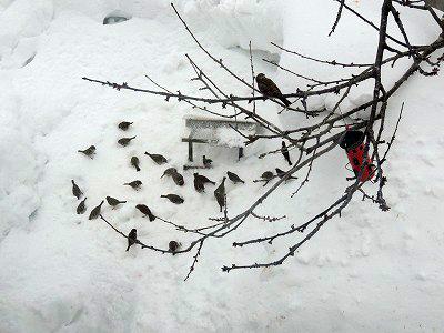 ⑨雪が積もってDSCN5070