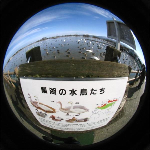 20150121★01-IMG_2544