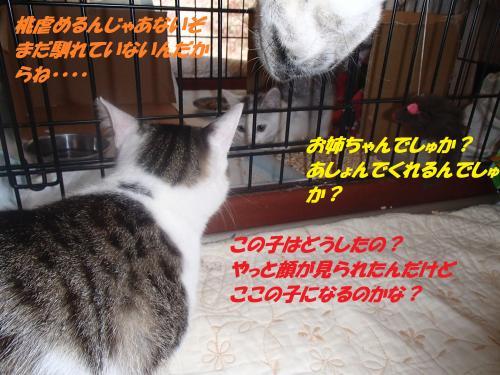 P6190291_convert_20150619093734.jpg