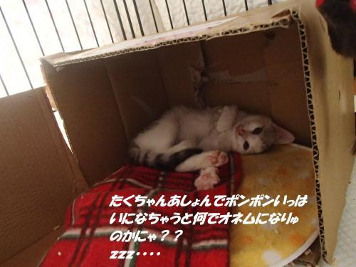 P6210317_convert_20150624094336.jpg