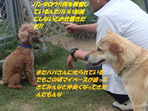 P6210319_convert_20150622090706.jpg