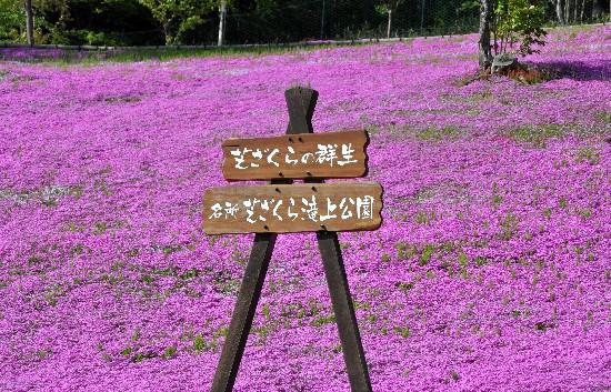 29sibasakura1.jpg