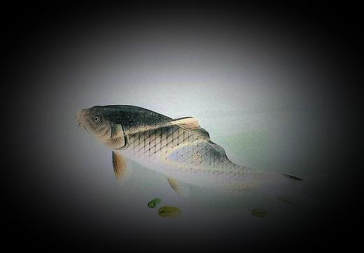 瓢池園 釉下彩鯉図陶額 (2)