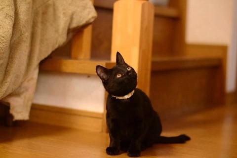 cat_48075_1.jpg