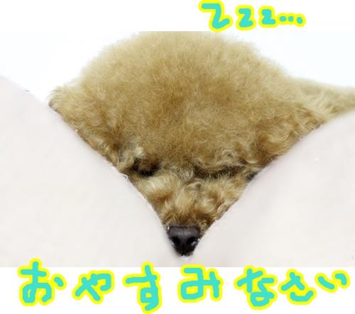 5おやすみ