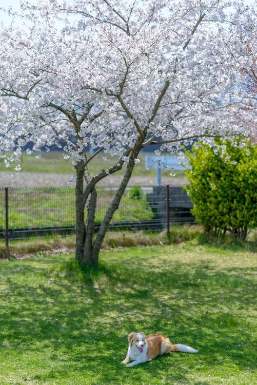 DSC_2942 - 2015-04-17 11-59-25