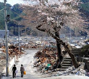 被災地にも桜が